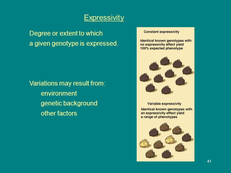 42 Variable Expressivity Spotting in dogs All have the same genotype