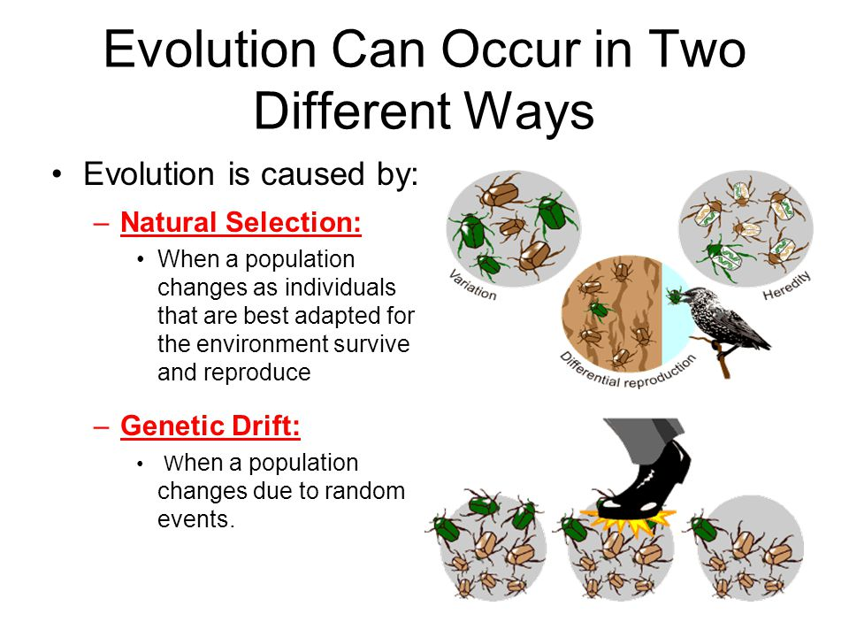 Natural Selection or Genetic Drift?