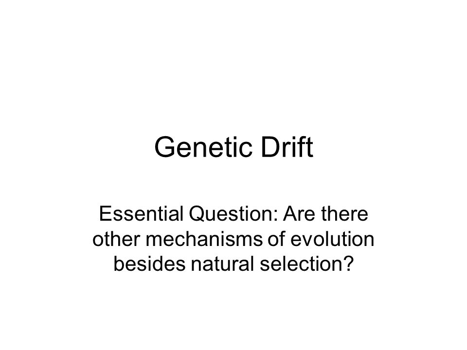 Genetic Drift Do Now – p.34L 1)Why did the population of green beetles die.
