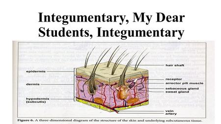 Integumentary, My Dear Students, Integumentary. Beauty is Only Skin Deep.