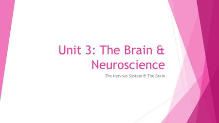 Unit 3: The Brain & Neuroscience The Nervous System & The Brain.