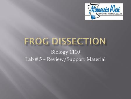 Biology 1110 Lab # 5 – Review/Support Material. Frog Dissection This presentation is not intended to replace the dissection lab exercise. The purpose.