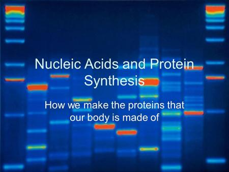 Nucleic Acids and Protein Synthesis How we make the proteins that our body is made of.