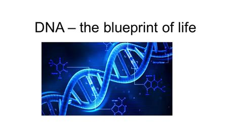 DNA – the blueprint of life. The Real Deal DNA stands for DEOXYRIBONUCLEIC ACID DNA is the genetic material found in the nucleus DNA can be found as chromatin.