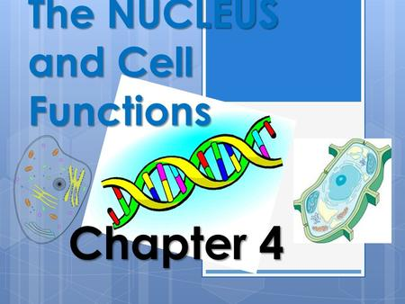 The NUCLEUS and Cell Functions Chapter The Function of the Nucleus within the Cell Animal Cells Animal cells are equipped with many structures.