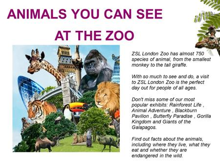 ANIMALS YOU CAN SEE AT THE ZOO ZSL London Zoo has almost 750 species of animal, from the smallest monkey to the tall giraffe. With so much to see and do,