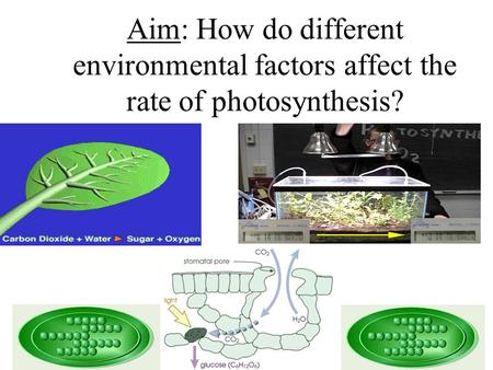 Aim: How do different environmental factors affect the rate of photosynthesis?