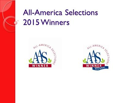 All-America Selections 2015 Winners. Dianthus Interspecific Jolt  Pink F AAS Bedding Plant Winner.