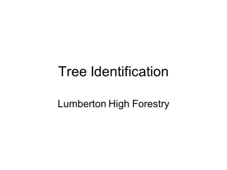 Tree Identification Lumberton High Forestry. Cypress.