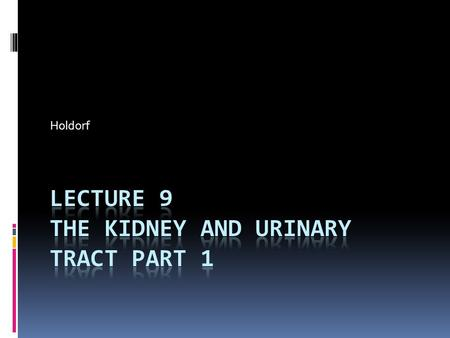Holdorf. Outline Urinary Tract Part I of II  Normal anatomy  Anatomical Terminology  Renal Congenital abnormalities  Ectopic Kidney  Horseshoe Kidney.