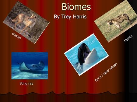 Biomes Biomes By Trey Harris coyote Sting ray Hyena Orca / killer whale.