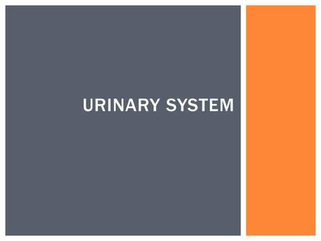 URINARY SYSTEM  To identify and describe the main organs of the urinary system  To describe the structure of a nephron.  To describe the 3 steps of.