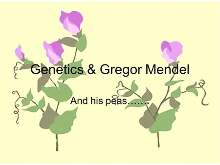 Genetics & Gregor Mendel And his peas…….. We all have questions about where we came from and how we got the traits we have. 1)Look around you. Do you.