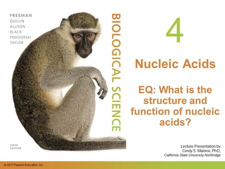© 2017 Pearson Education, Inc. Lecture Presentation by Cindy S. Malone, PhD, California State University Northridge 4 Nucleic Acids EQ: What is the structure.