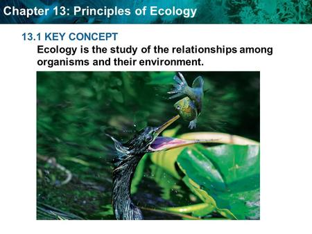 Chapter 13: Principles of Ecology 13.1 KEY CONCEPT Ecology is the study of the relationships among organisms and their environment.