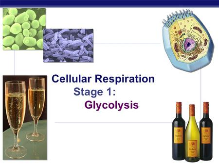 AP Biology Cellular Respiration Stage 1: Glycolysis.