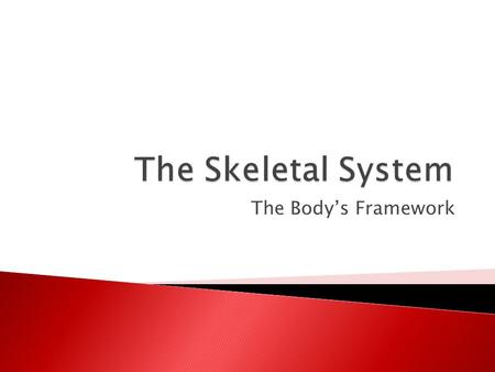 The Body's Framework.  The adult skeletal system consists of: ◦ 206 bones ◦ The strong elastic tissue that forms ligaments, tendons, and cartilages 