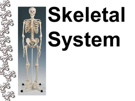 Skeletal System. Entrance Question Explain the relationship between cells, tissues, organs, and organ systems?
