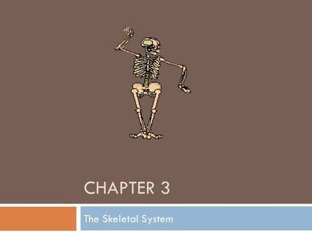 CHAPTER 3 The Skeletal System. Structures and Functions  Consists of bones, bone marrow, cartilage, joints, ligaments, synovial membrane (and fluid),