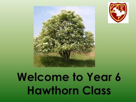 Welcome to Year 6 Hawthorn Class. Year 6 Team Miss Kim Sheppard – Class Teacher Mrs Carolyne Penson – Teaching Assistant.
