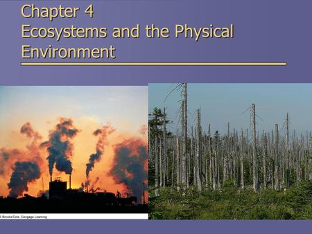 Chapter 4 Ecosystems and the Physical Environment.
