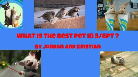 What is the best pet in 5/6pt ? By jordan and Kristian.