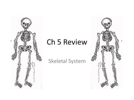 Ch 5 Review Skeletal System. Identify structure A.Periosteum B.Diaphysis C.Epiphysis D.Spongy bone.
