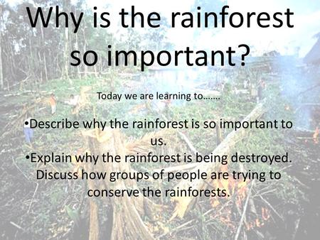 Why is the rainforest so important? Today we are learning to……. Describe why the rainforest is so important to us. Explain why the rainforest is being.
