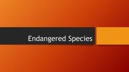 Endangered Species. What is an endangered species? Any animal or plant that is in danger of becoming extinct because of changing environments or predators.