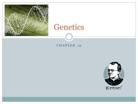 CHAPTER 12 Genetics. Gregor Mendel Gregor Mendel was a monastery priest who carried out the first important studies of heredity  Heredity – the passing.