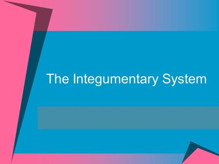 The Integumentary System. Integumentary System Includes:  Skin (cutaneous membrane)  Subcutaneous tissue below the skin  Accessory Structures  Sweat.