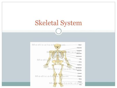 Skeletal System. What is the job of the skeletal system? The skeleton has five major functions: 1) Provides shape and support. 2) Enables you to move.
