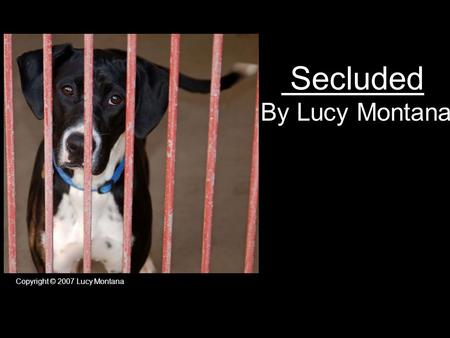 Secluded By Lucy Montana Copyright © 2007 Lucy Montana.