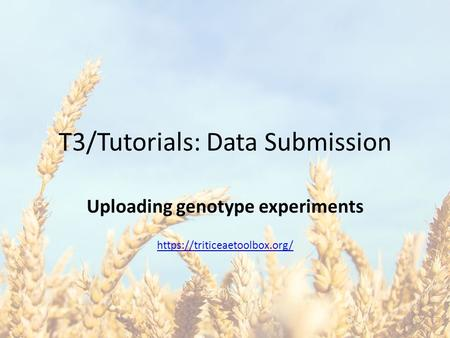 T3/Tutorials: Data Submission Uploading genotype experiments https://triticeaetoolbox.org/