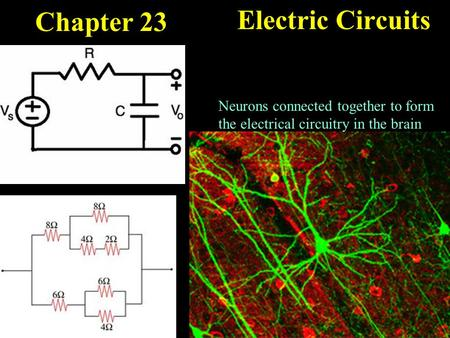 Chapter 23 Electric Circuits Neurons connected together to form the electrical circuitry in the brain.