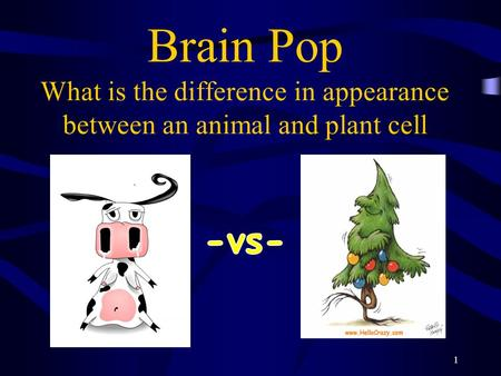 Brain Pop What is the difference in appearance between an animal and plant cell 1.