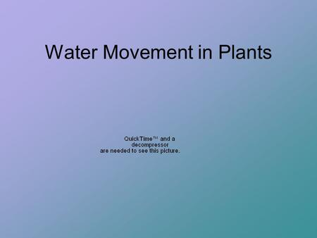 Water Movement in Plants. Forces that move water in plants Osmosis - allows water to enter cells.