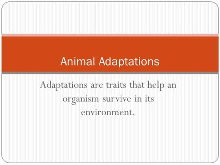 Adaptations are traits that help an organism survive in its environment. Animal Adaptations.
