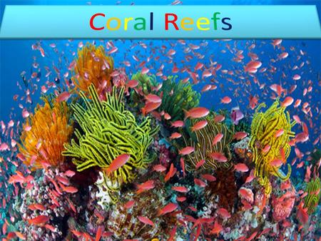 Biodiversity is the way in which plants and animals co-exist in the ecosystem. Coral Reefs form some of the most productive ecosystems. They provide shelter.