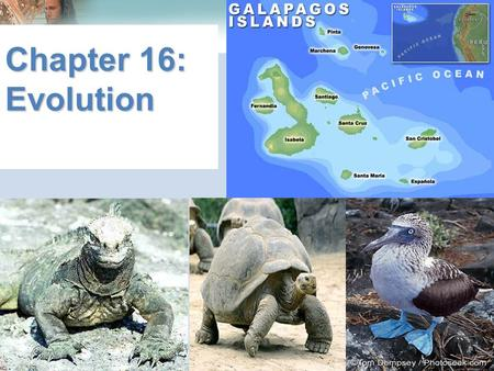 Chapter 16: Evolution. Lamarck's Theory of Acquired Characteristics Jean Baptiste de Lamarck 1809 suggested how species change over time Said that traits.