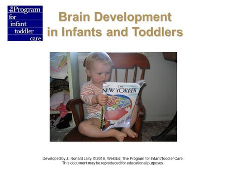 Brain Development in Infants and Toddlers Developed by J. Ronald Lally. © 2016, WestEd, The Program for Infant/Toddler Care. This document may be reproduced.