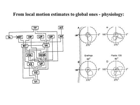 From local motion estimates to global ones - physiology: