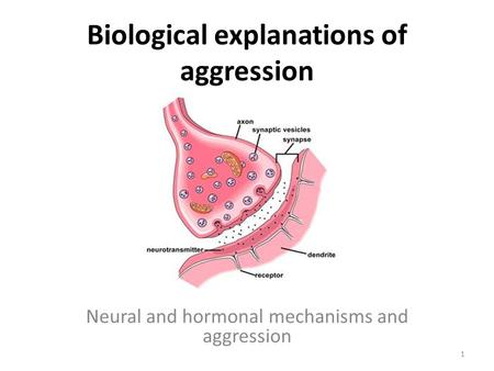 Biological explanations of aggression Neural and hormonal mechanisms and aggression 1.