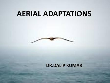 AERIAL ADAPTATIONS DR.DALIP KUMAR. AERIAL ADAPTATIONS Animals that can fly and spend a lot of their time in the air are called AERIAL ANIMALS. AERIAL.