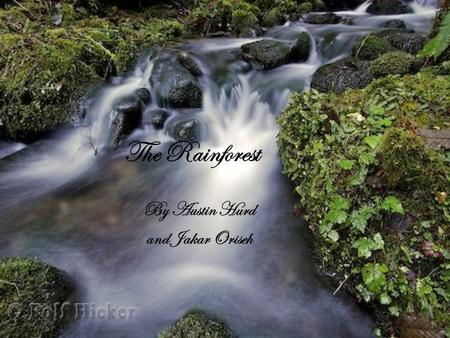 The Rainforest By Austin Hurd and Jakar Oriseh What is a rain forest? There are 4 layers in the rainforests such as the forest floor, understory, canopy,