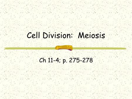 Cell Division: Meiosis Ch 11-4; p Types of Reproduction Asexual – mitosis; results in clones or genetically identical offspring (2N) Sexual.