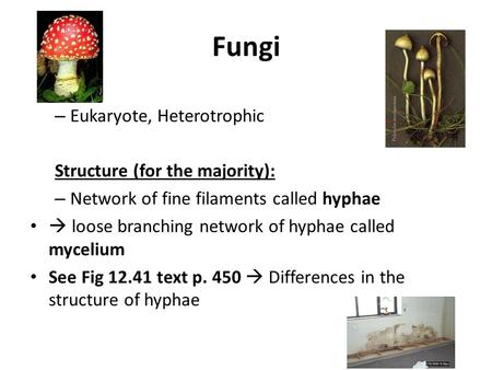 Fungi – Eukaryote, Heterotrophic Structure (for the majority): – Network of fine filaments called hyphae  loose branching network of hyphae called mycelium.