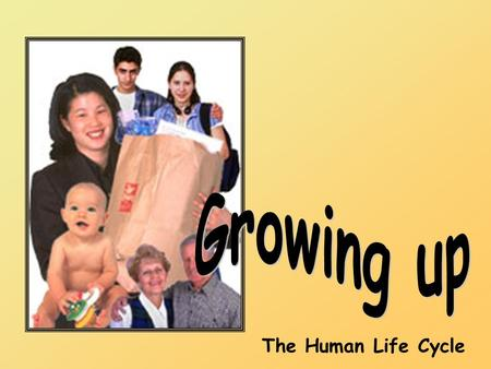 The Human Life Cycle. Look at the pictures below. They show people of different ages. Some are young and some are older. Can you put them in order, starting.