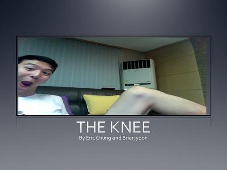 The Knee Is a Joint More specifically … A LEG JOINT.
