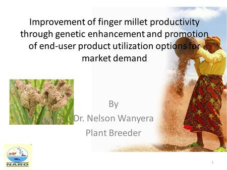 Improvement of finger millet productivity through genetic enhancement and promotion of end-user product utilization options for market demand By Dr. Nelson.